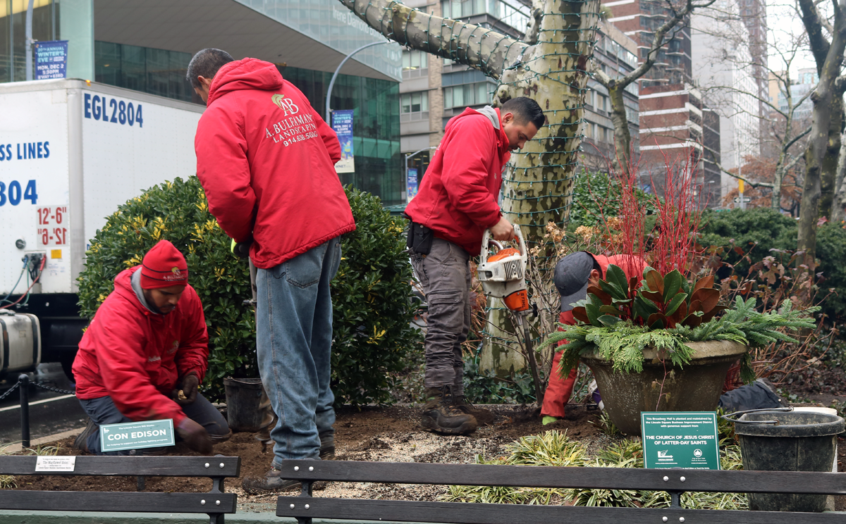 A Bulfamante landscaping workers install winter plants in the Broadway Mall end bed at 65th Street