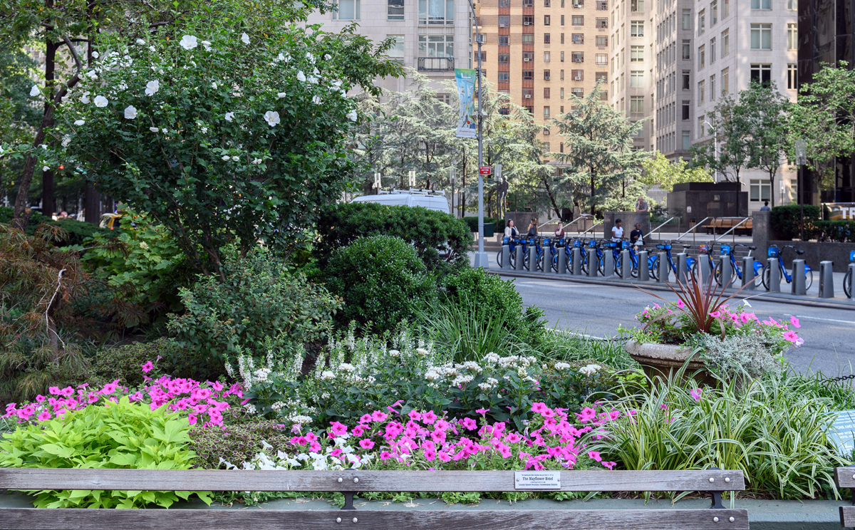 Broadway Mall end bed lush with green shrubs and pink and white annuals