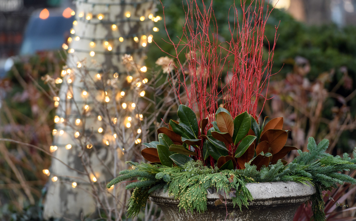 decorative red stems are seen with the background of a lit up tree in a Lincoln Square BID urn in the Broadway Mall median
