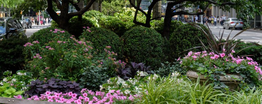 Spend Your Summer in Lincoln Square